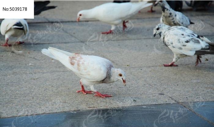 鸟类鸽朋友鸽子建筑鸟动物700_445我的广场动物长颈鹿用英语写几句话图片