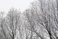 冬天落满雪的枝头