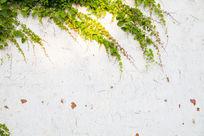 爬山虎艺术墙