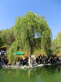 树下垂钓的人群