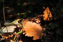 阳光下的落叶