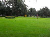 公园里绿色的草坪