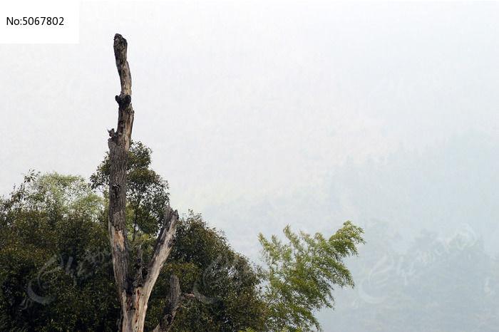 枯死的大树图片,高清大图_森林树林素材