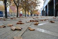 人行道上的落叶