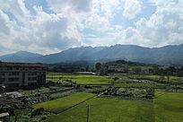蓝天白云下的稻田田园风光