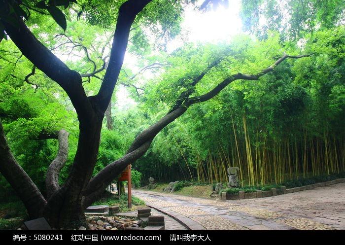 老树图片,高清大图_森林树林素材