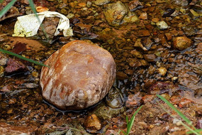 清澈小溪流中的石头