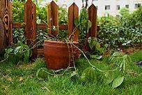 小区草地上的花藤植物盆栽