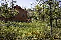 森林草地木屋野花