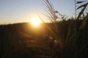 太阳升起的芦苇荡