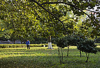 公园除草的人