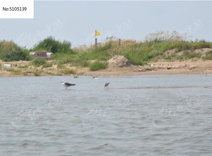 原创摄影图 动物植物 空中动物 海边的鸟