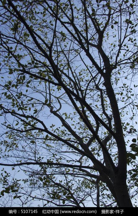 秋天的树枝