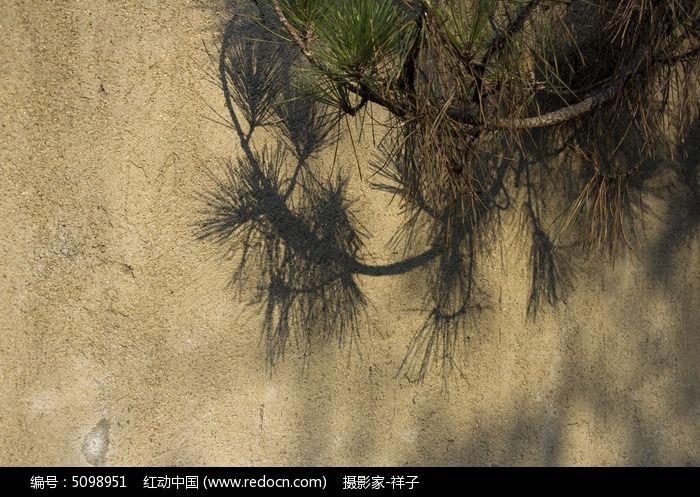 松树叶影子图片,高清大图_树木枝叶素材_编号5098951