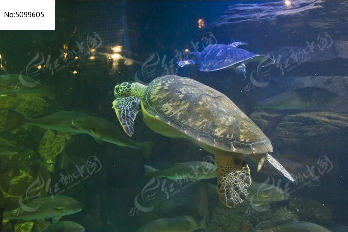 壁纸 动物 龟 海底 海底世界 海洋馆 水族馆 鱼 鱼类 700_497图片