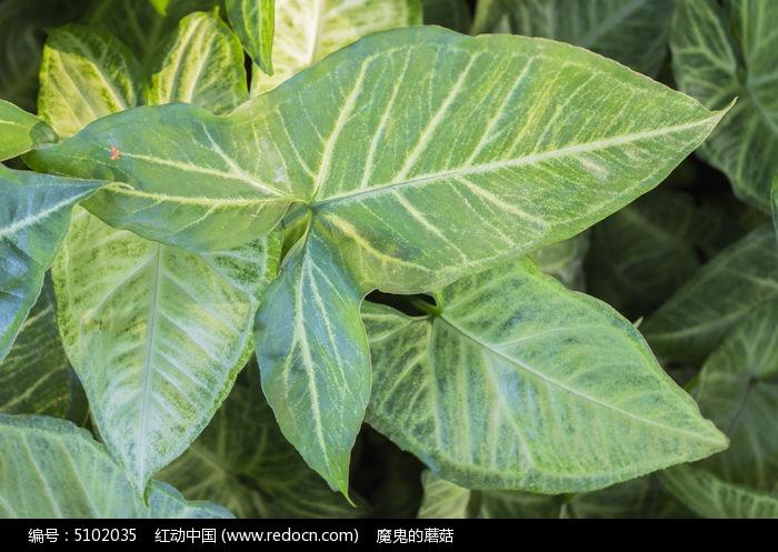 叶子植物图片,高清大图