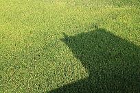 稻田中的建筑影子