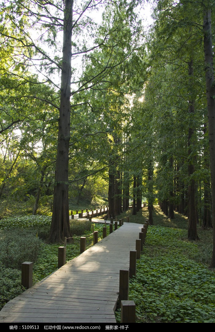 青岛中山公的木栈道