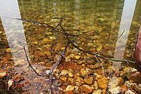人工湖中的枯树枝