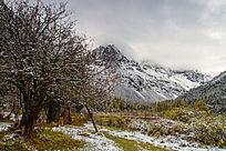 雪山流水山林