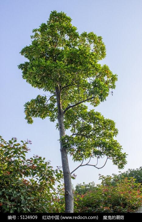 原创摄影图 动物植物 树木枝叶 风景树  请您分享: 红动网提供树木