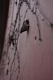 红色墙壁枯藤粗糙底纹背景