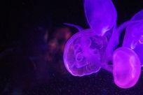 飘飞的彩色光影立体水母