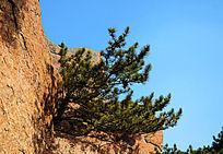 千山仙人台山顶峭壁上生长的一棵树