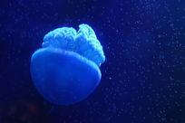 水母摄影图海洋生物生物世界