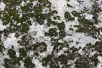 华山岩石苔藓斑驳底纹背景素材
