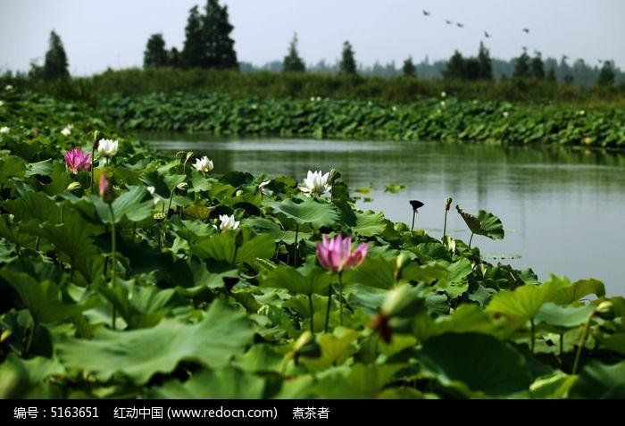 夏荷正/湿地 水域沼泽湖水倒影 湿地风光生态系统自然景观 湿地植物...