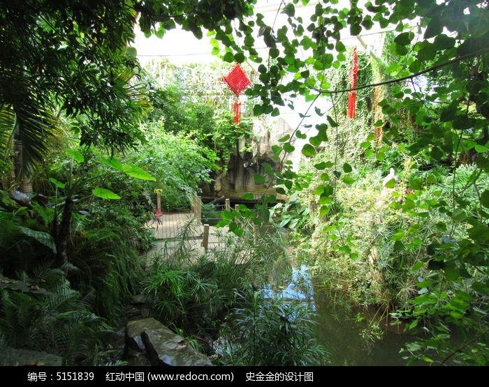 小溪边植物图片