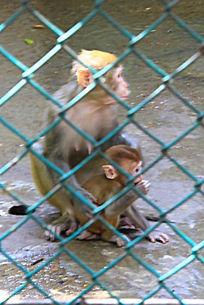 动物园里母猴和小猴