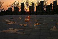 广场地板上的小鸟图案