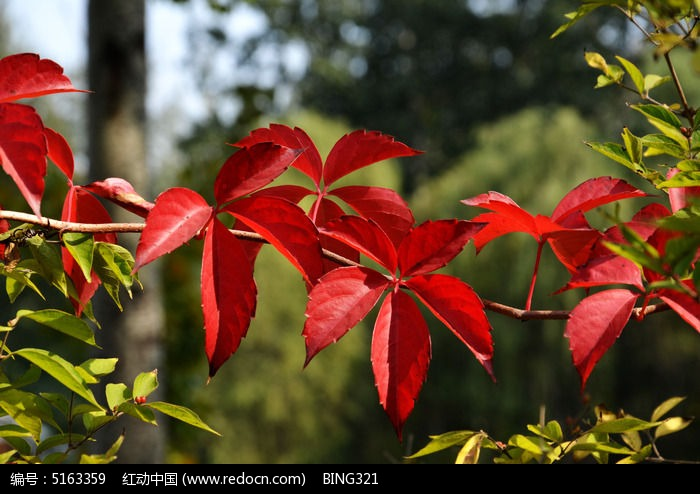 红树叶图片,高清大图_树木枝叶素材