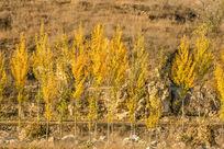 秋天树林风景