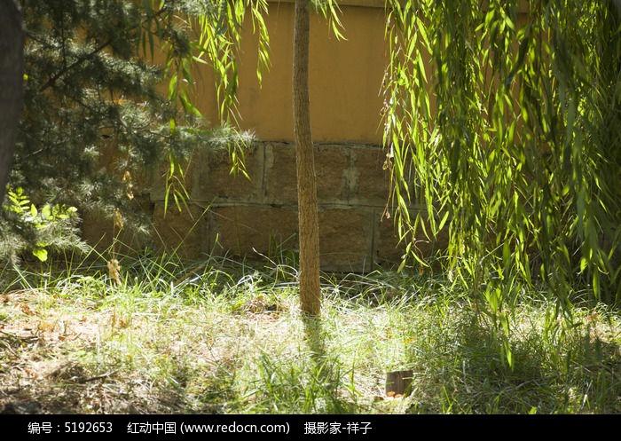 原创摄影图 动物植物 树木枝叶 柳树叶子