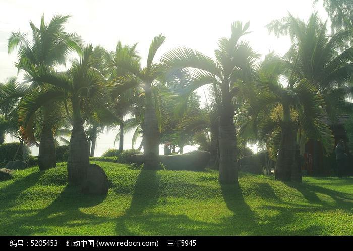 三亚热带树林