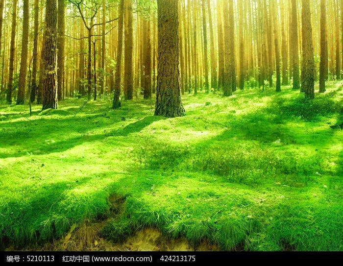 手工制作纸塑森林