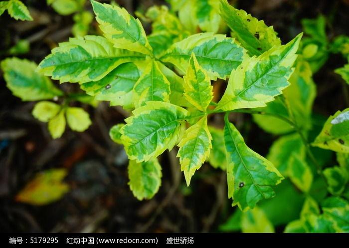 原创摄影图 动物植物 树木枝叶 叶子素材  请您分享: 红动网提供树木