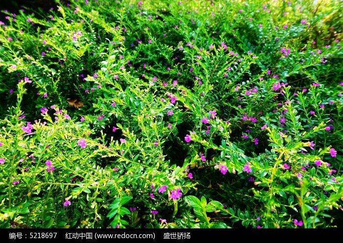 植物花卉背景图片,高清大图_树木枝叶素材