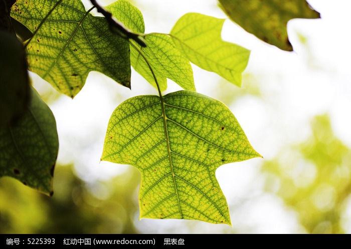 原创摄影图 动物植物 花卉花草 初秋的植物叶子  请您分享: 红动网
