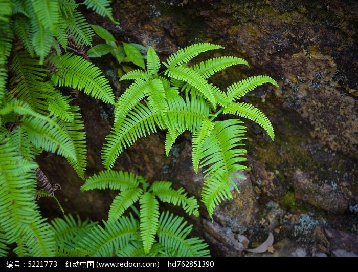 原创摄影图 动物植物 花卉花草 绿草  请您分享: 红动网提供花卉花草