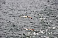大海上的两只海鸥