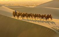 额济纳的沙丘