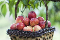 篮子里的桃子