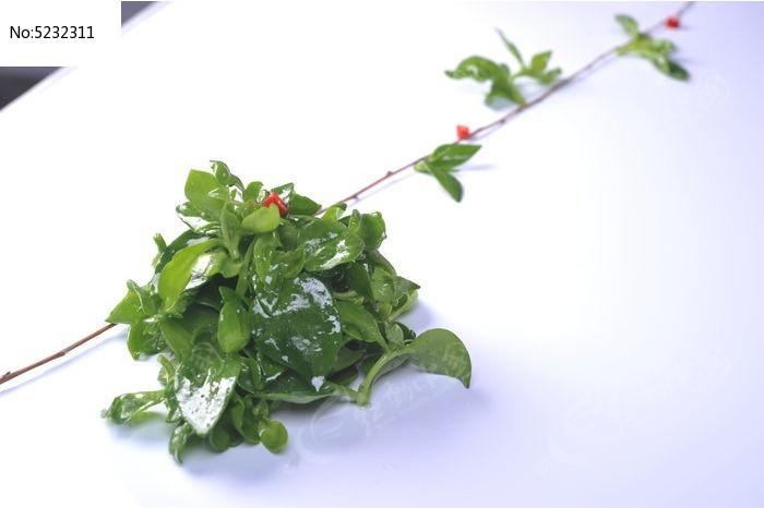 盆景 盆栽 植物 700_496图片