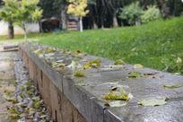 雨后洒满落叶的台阶