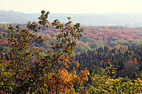 北宫国家森林景色