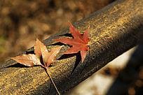 凋零的红叶